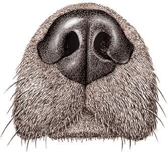 Опухоль носа у собаки и кошки