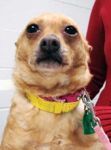 Опухоль слюнной железы у собаки и кошки
