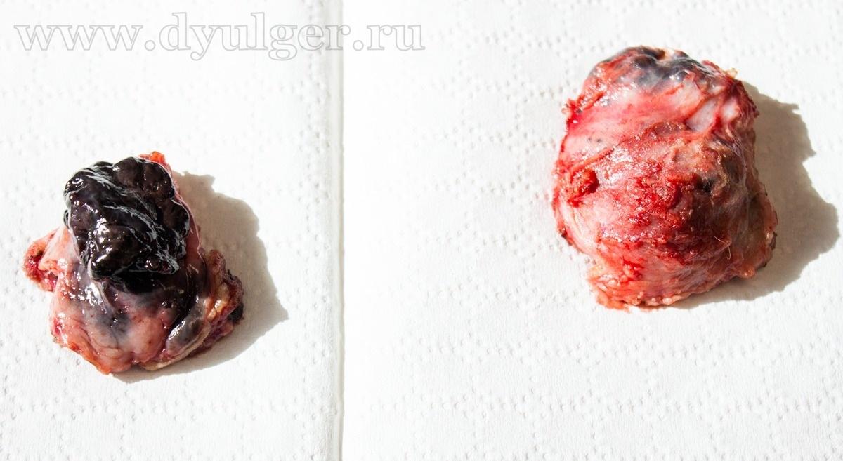 Опухоли области губы у собак и кошек